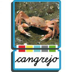 Autodidacto fotográfico cangrejo
