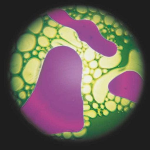 Disco Liquido - Violeta-Verde