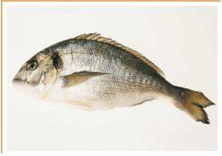 Fotos de alimentos pescado