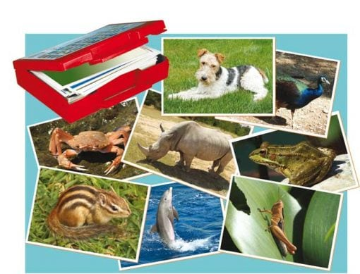 Fotos de animales tarjetas