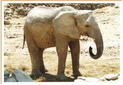 Fotos de animales elefante