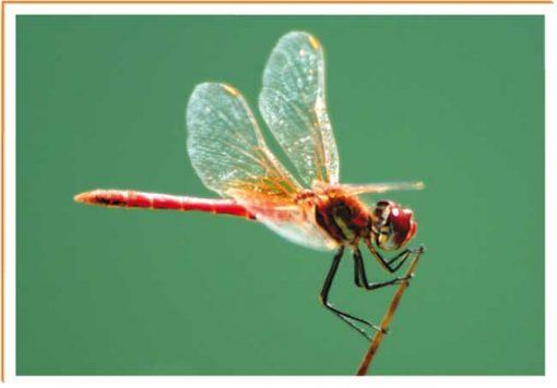 Fotos de animales insecto