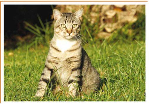 Fotos de animales gato
