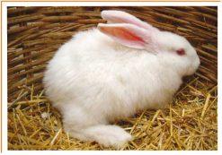 Fotos de animales conejo