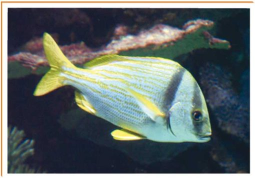 Fotos de animales pez
