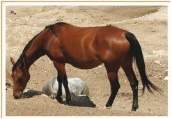 Fotos de animales caballo