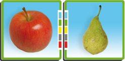 ¿Qué tienen en común? frutas
